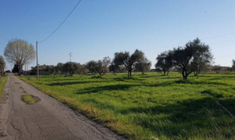PICCOLA AZIENDA AGRICOLA ALLE PORTE DI GROSSETO